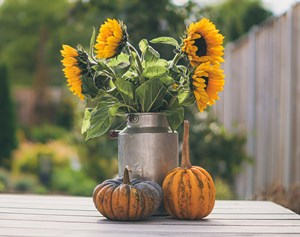 Sunflower_bouquet_with_thanksgiving_pumpkins