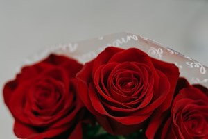 Three_Red_Roses
